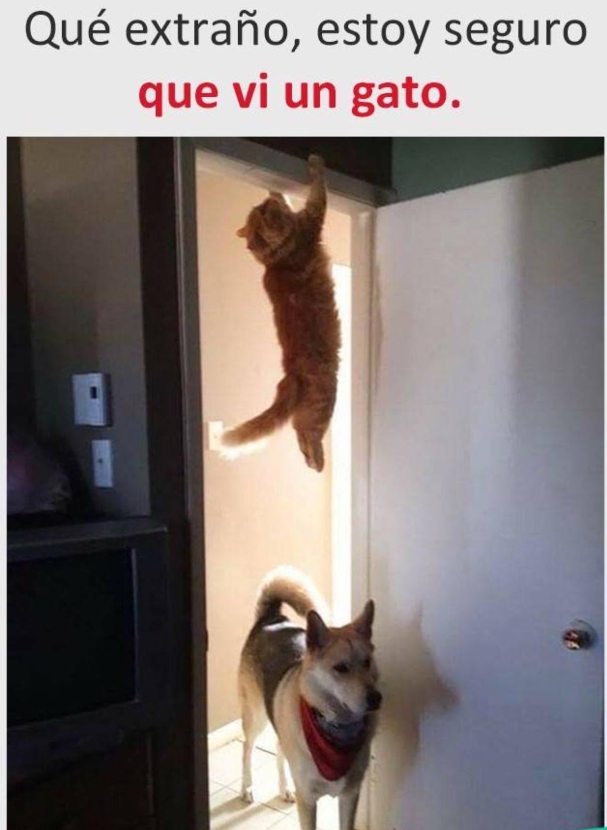 spidercat spider cat - meme
