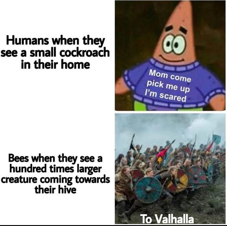 to beehalla - meme
