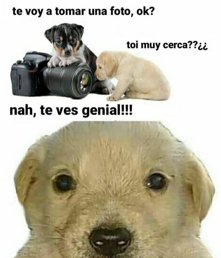 Perro foto - meme