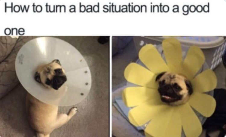 funny dogs - meme