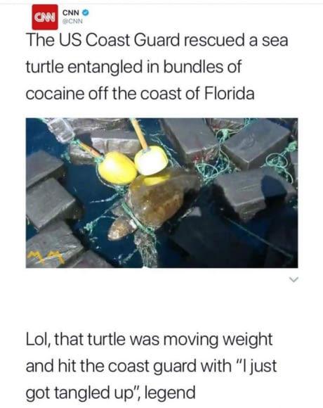 Cocaine Turtle - meme