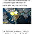 Cocaine Turtle