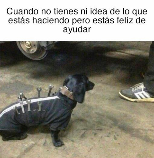 Perro atr - meme