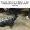 Perro atr