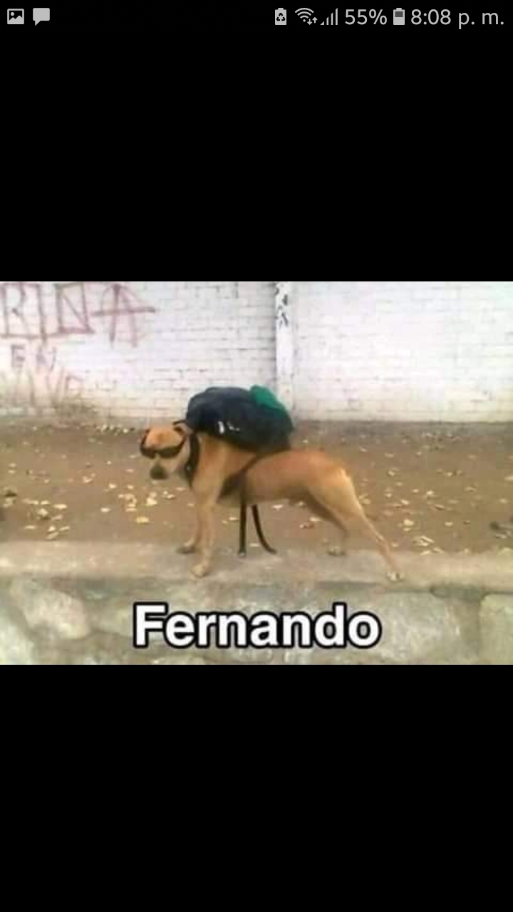 Fernando - meme
