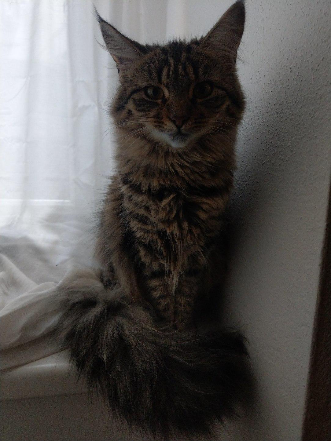 Das ist meine Katze ihr Pisser - meme