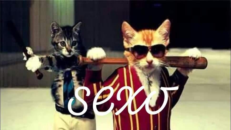gato sexo - meme