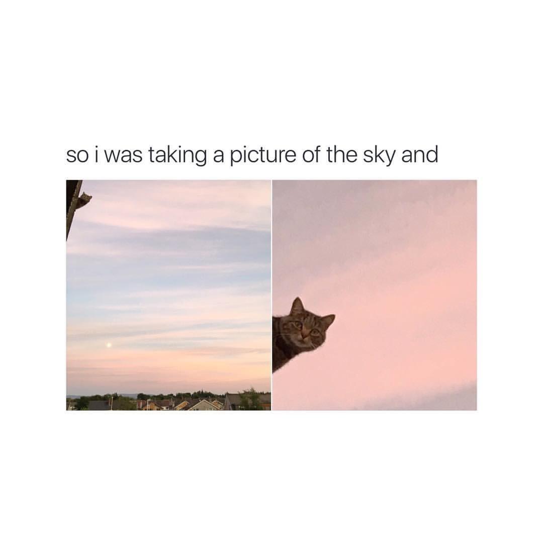 Cat selfie. - meme