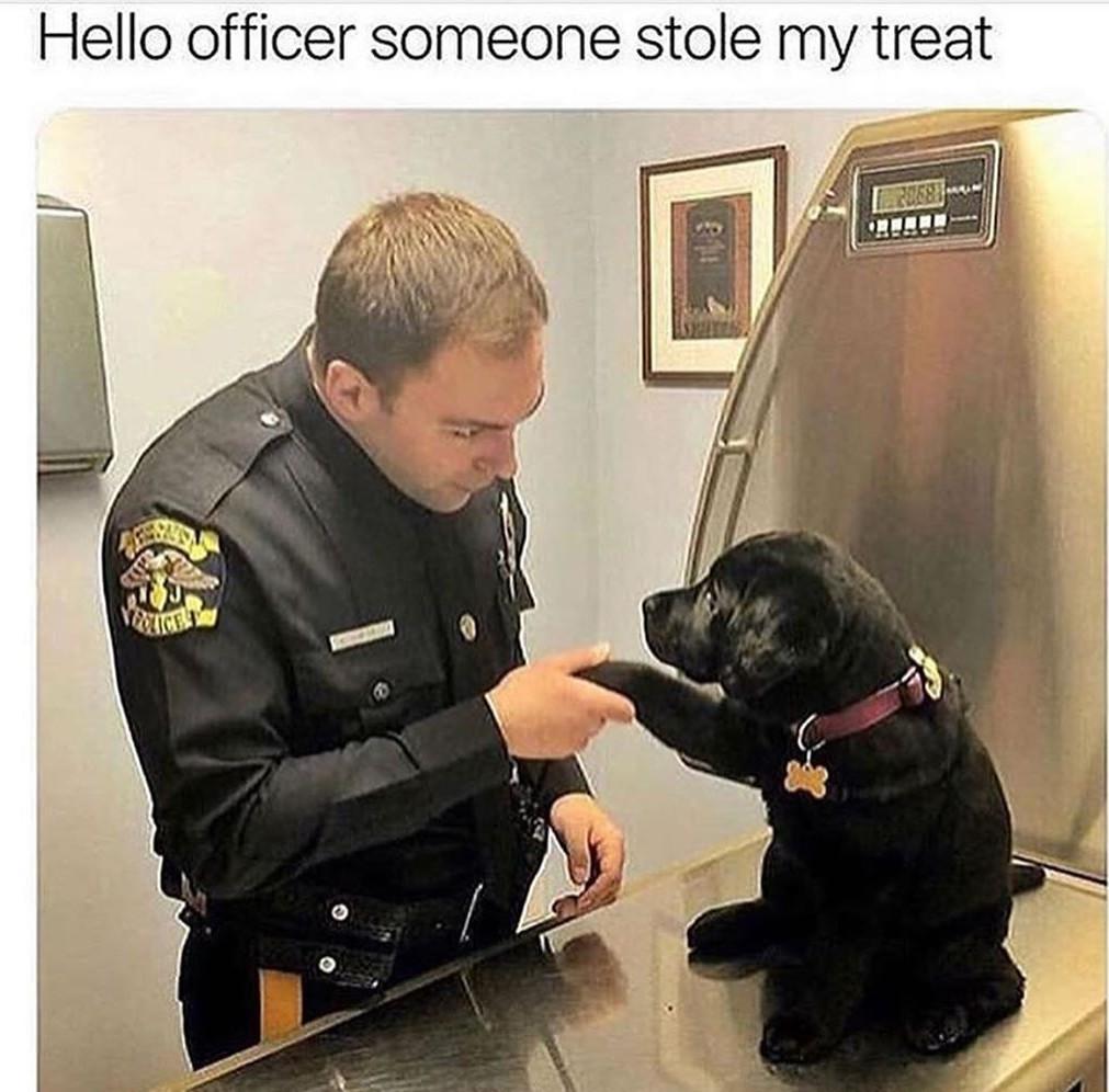 Doggo - meme