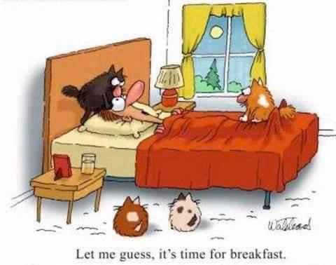 Animal alarm clock - meme