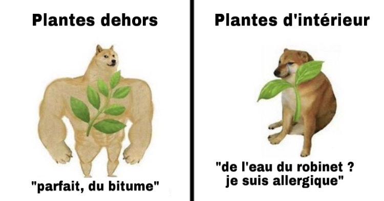 big up à mes plantes - meme