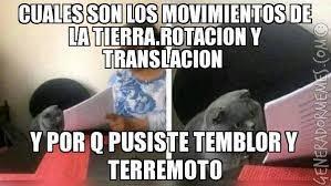 gato meme
