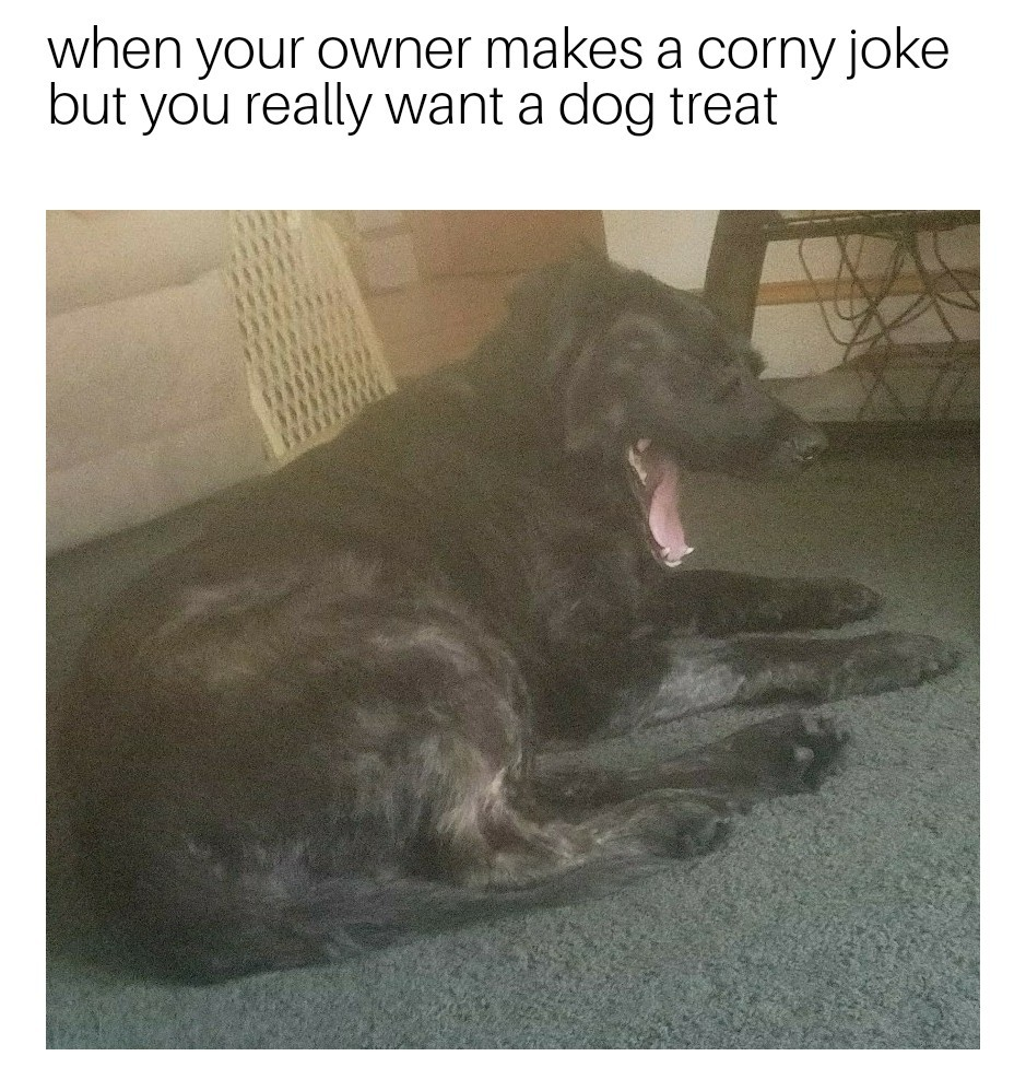 That's my doggy - meme
