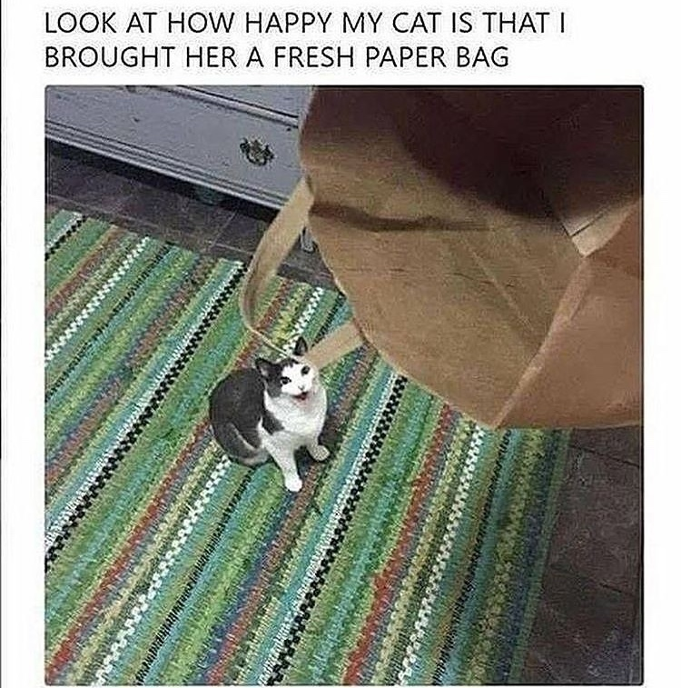 happy cat - meme