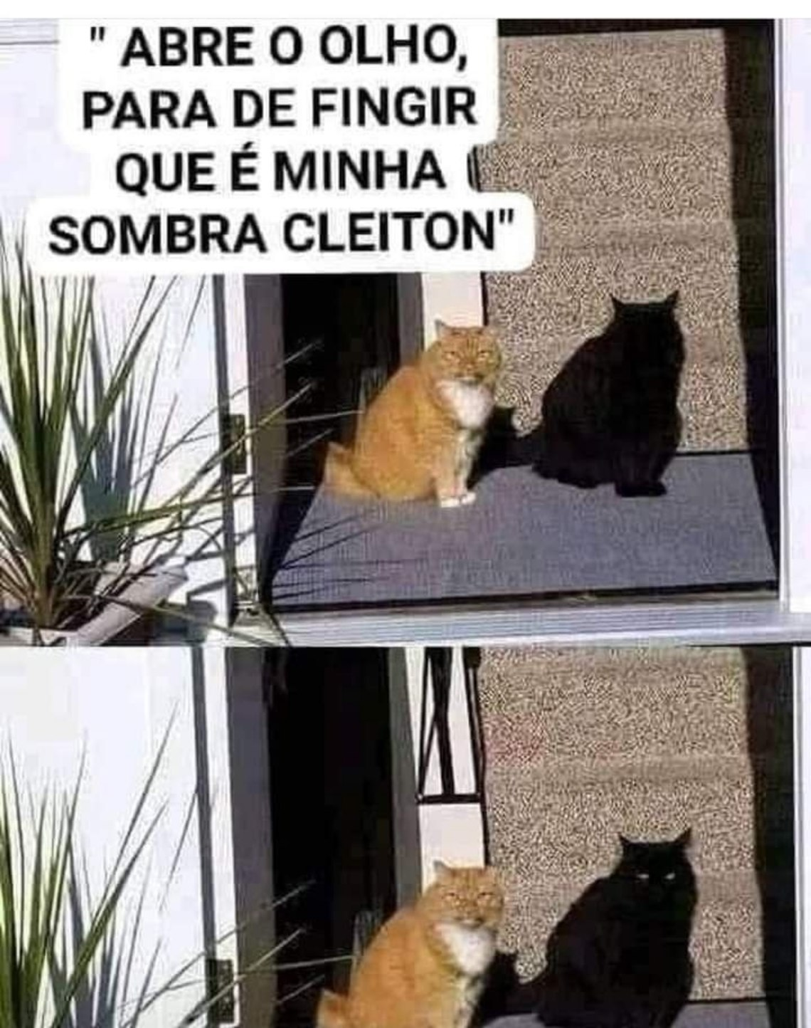 Pior que realmente se parece com a sombra do gato. Kkkk - meme