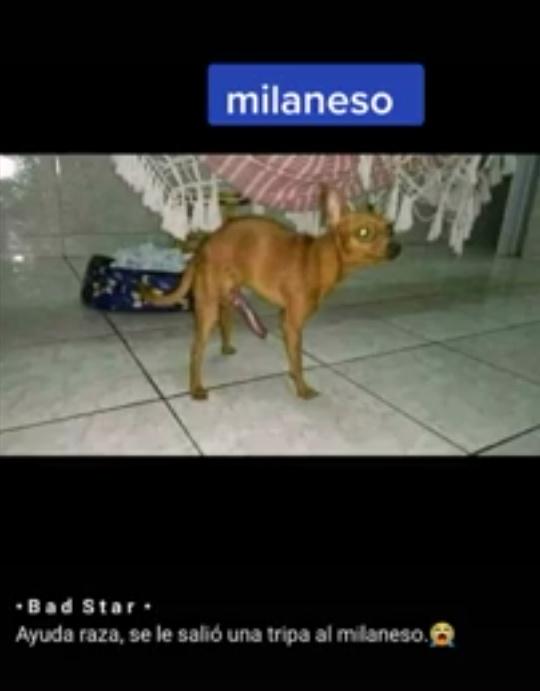 Pobre milaneso :( - meme