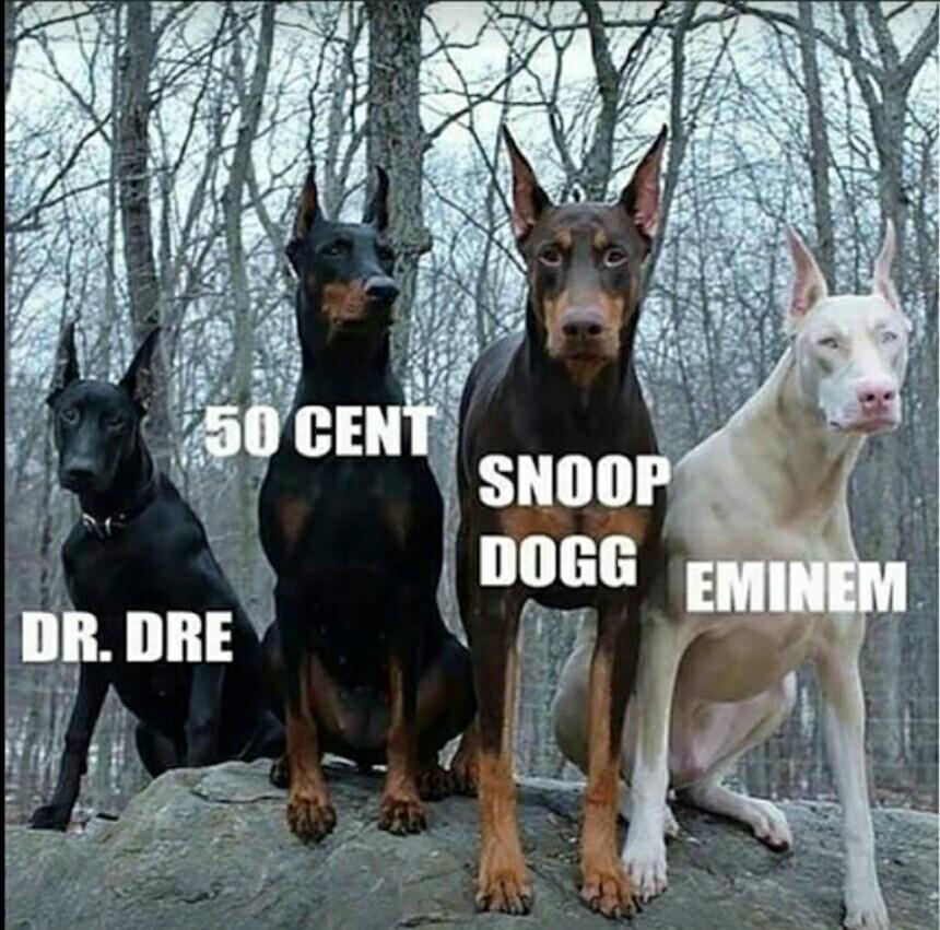 doggy style - meme
