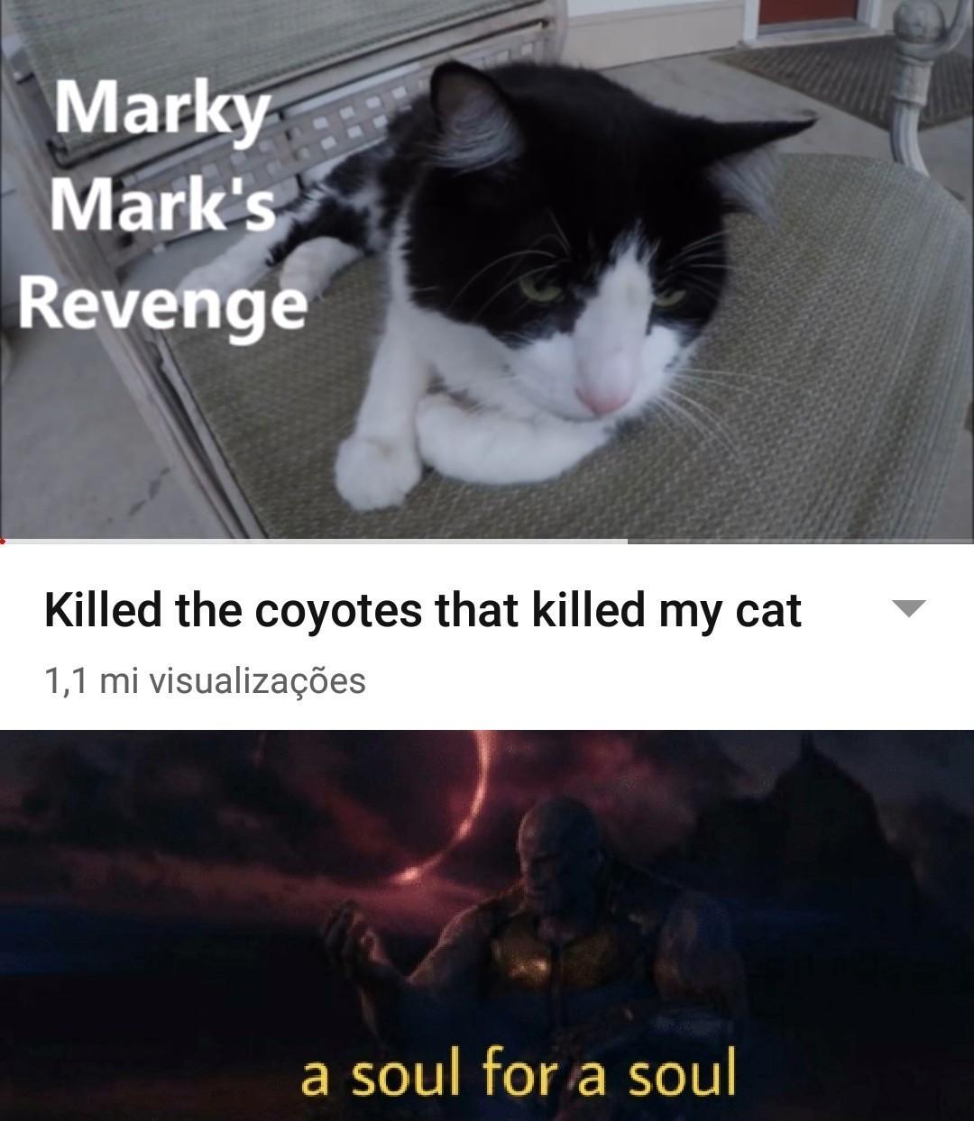 """""""Matei os coiotes que mataram o meu gato."""" - meme"""