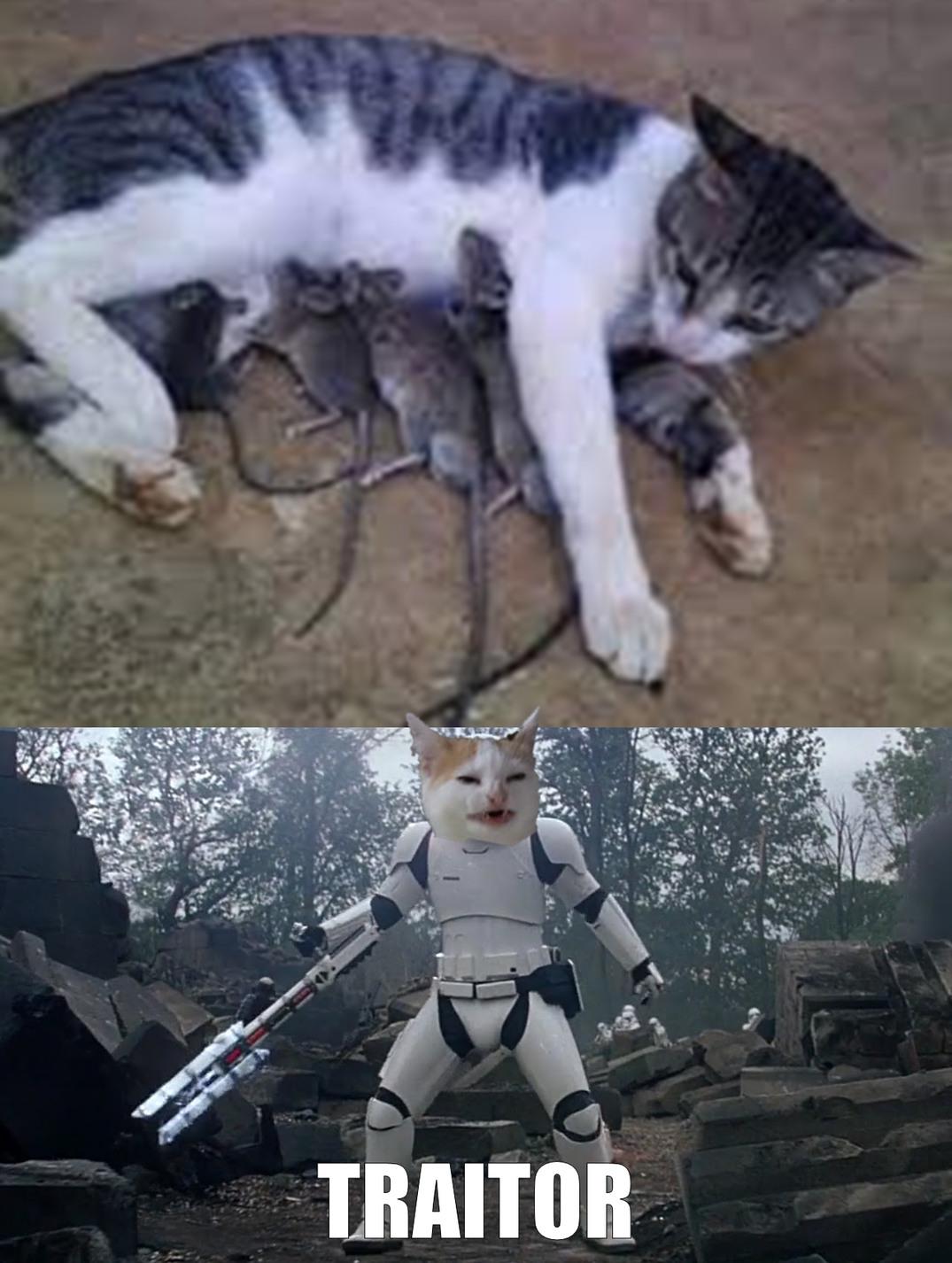 eres una deshonra para nuestra especie!!! - meme