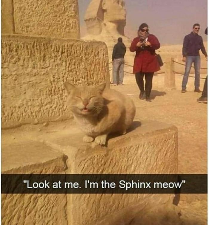 Egyptian Catto - meme