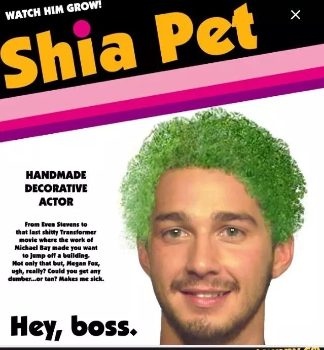 Shia pet - meme