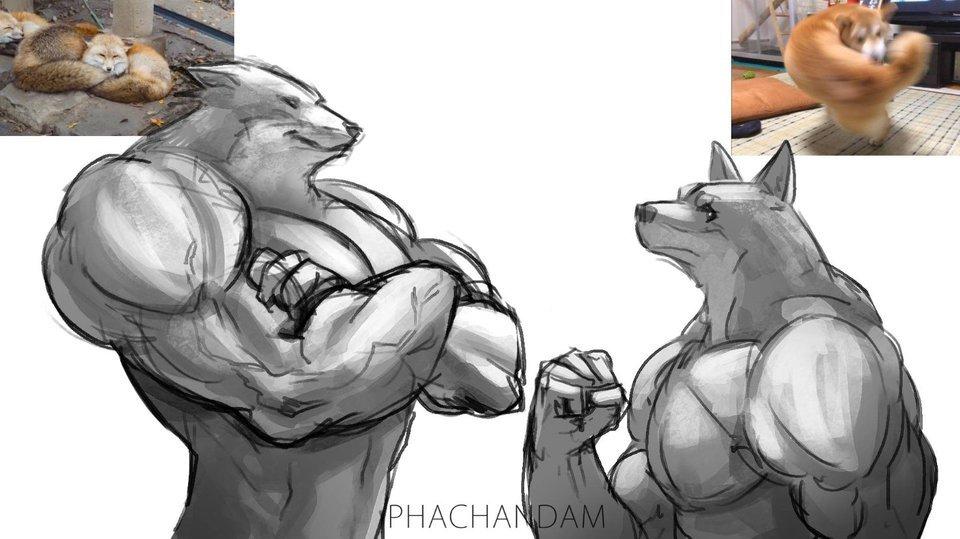 luta de deuses - meme