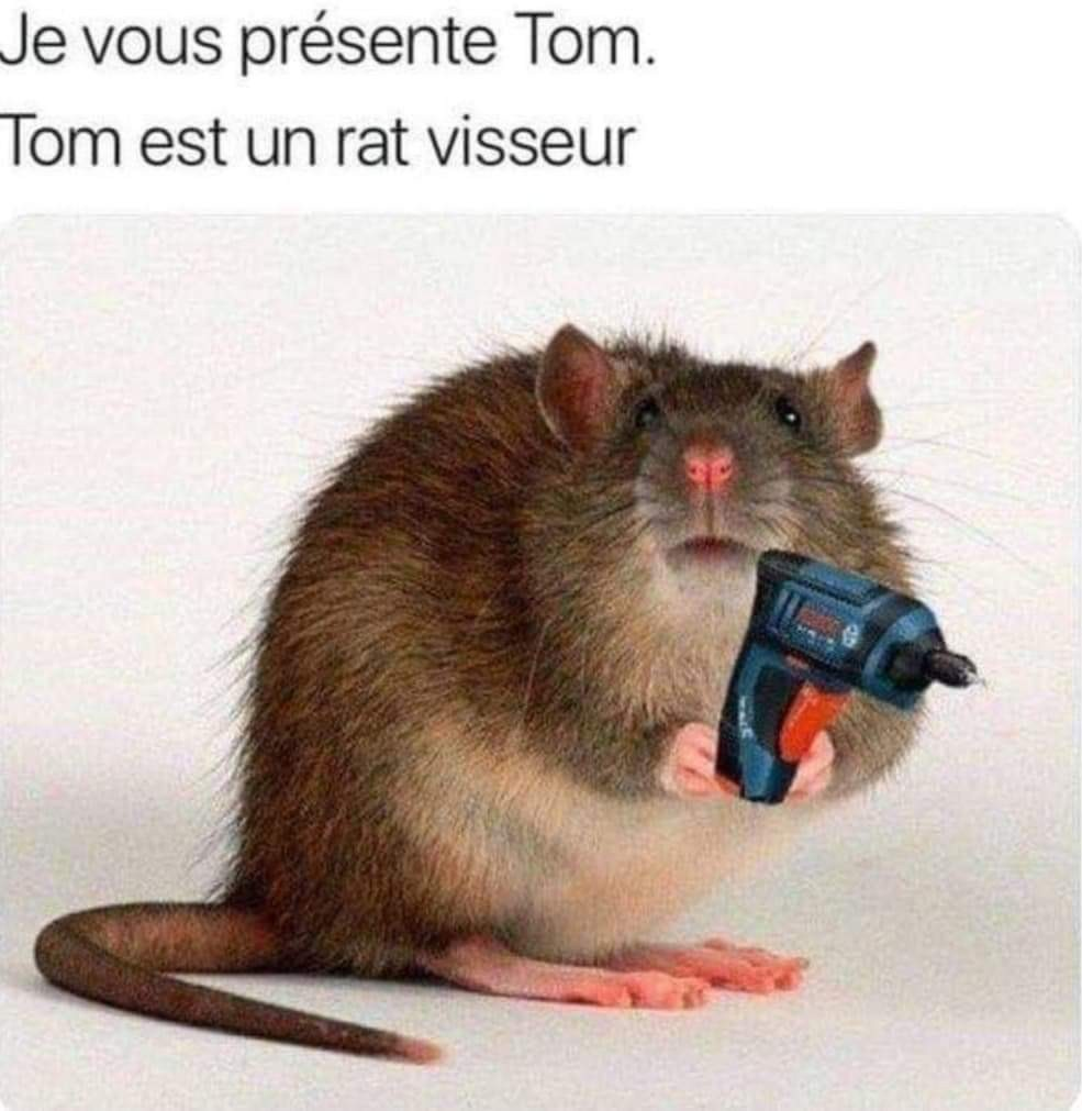 Dit bonjour a Tom ! - meme