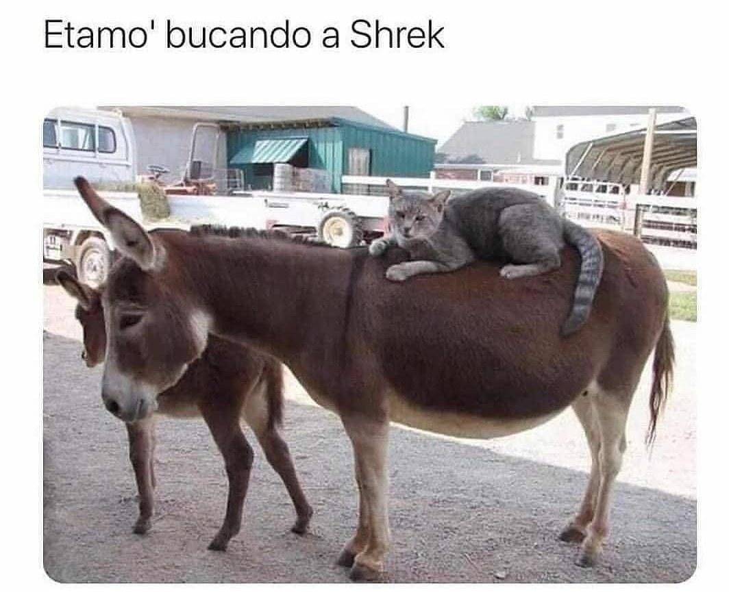 Donde estas Shrek!? - meme
