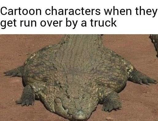 Fat fucc - meme