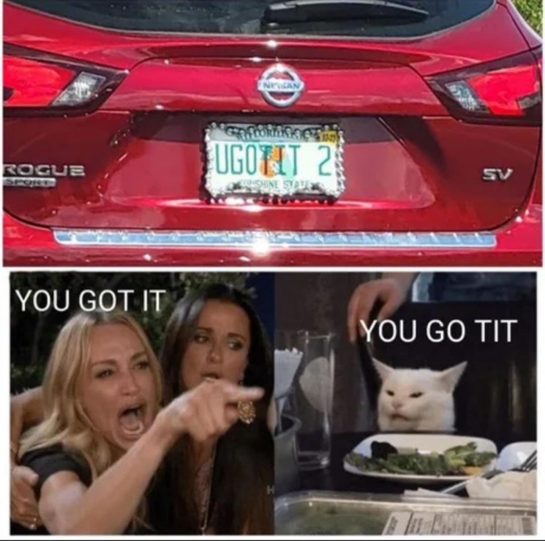 The cat got it right  - meme