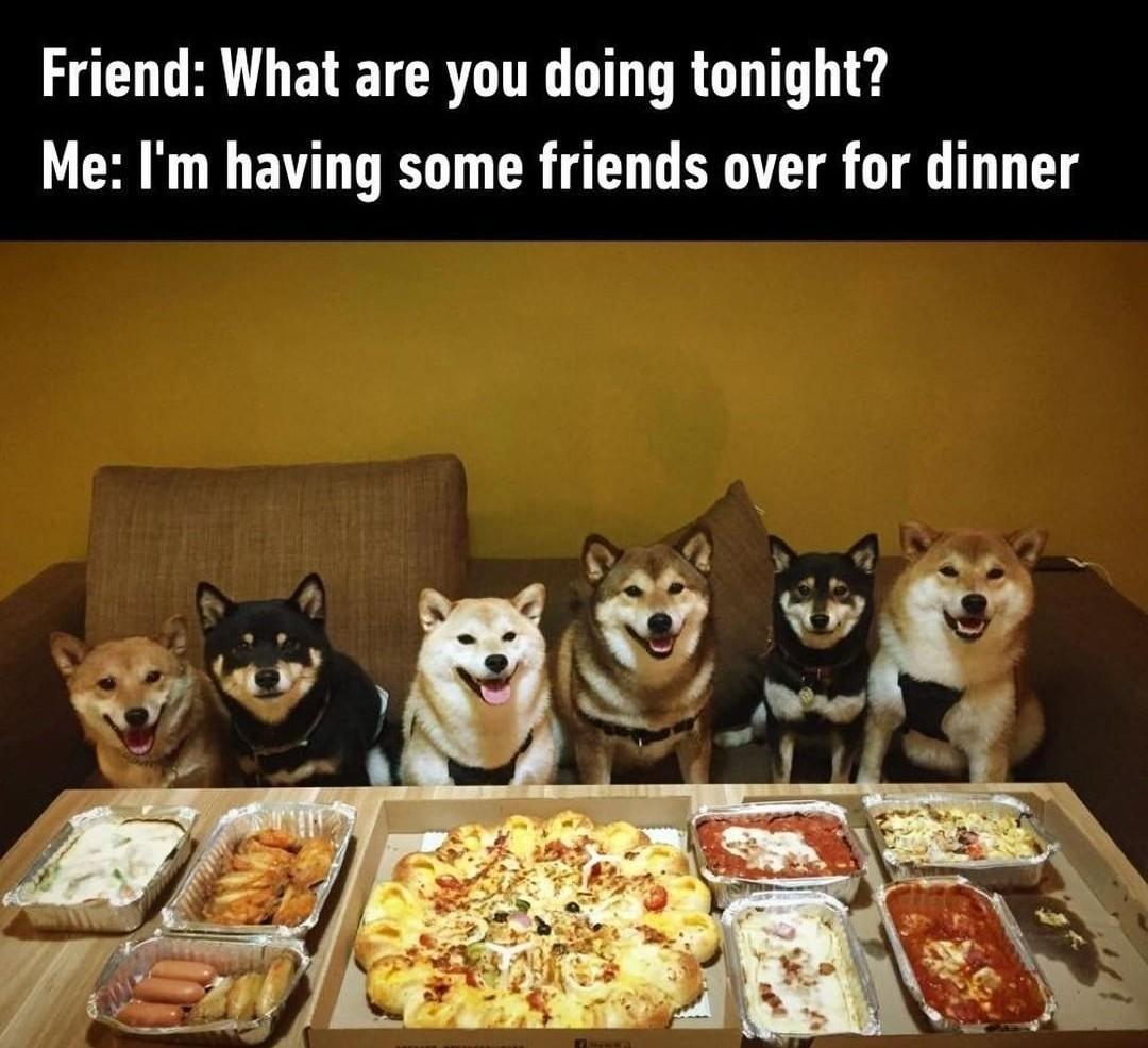 Doggo Party IS Life - meme