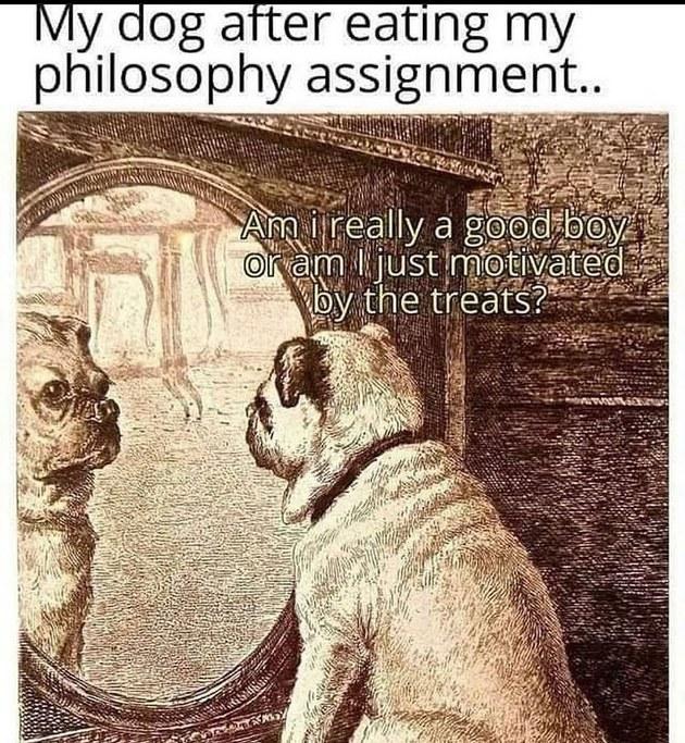 philosophy dog - meme