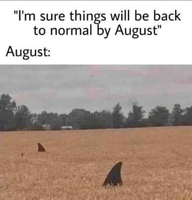 Things will be back to normal by August - meme