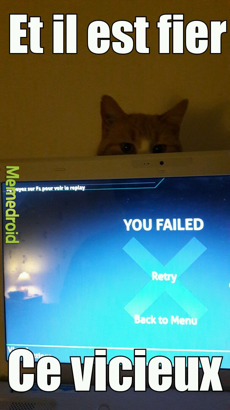 Quand tu perds a cause du chat