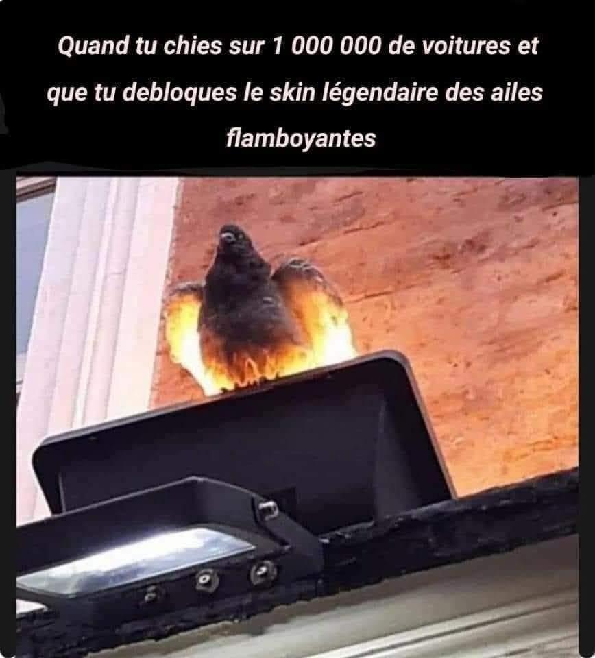 Le pigeon légendaire - meme
