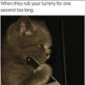 mess with catto you get the stabbo