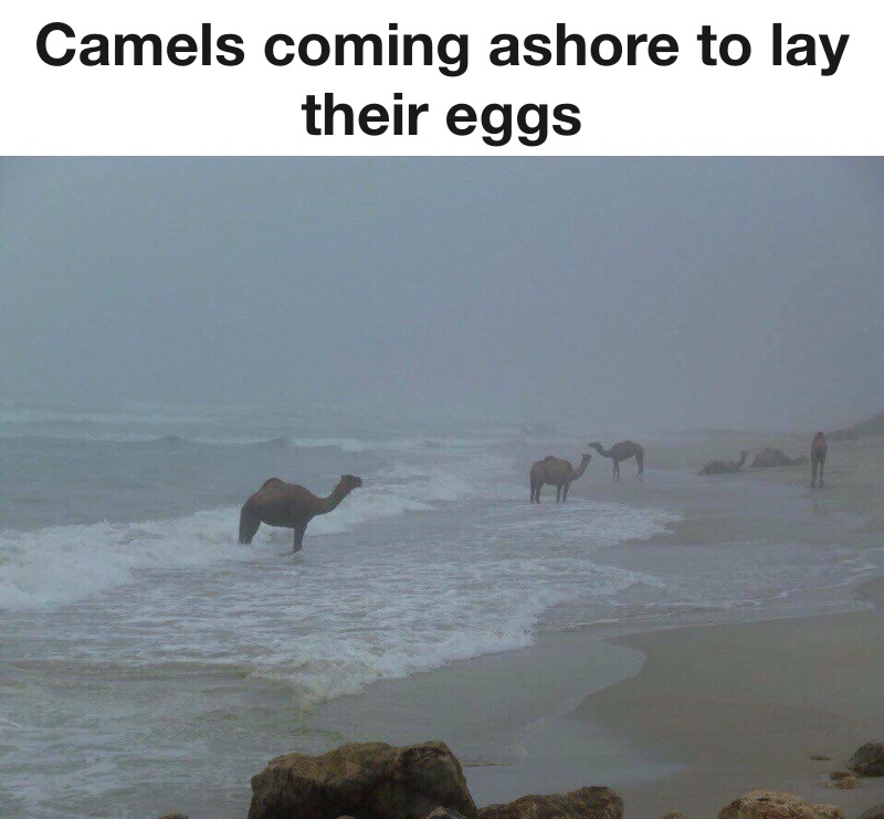 nature is beautiful and mysterious - meme