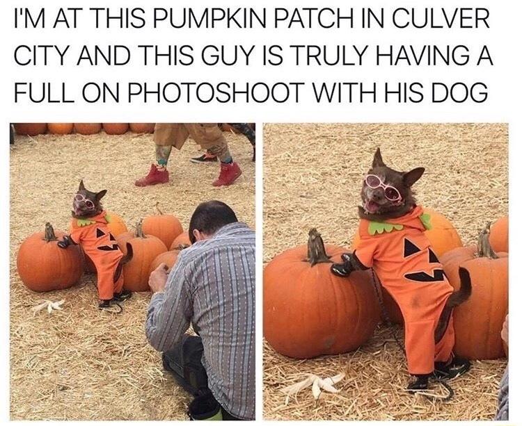 I LOVE DOGS - meme