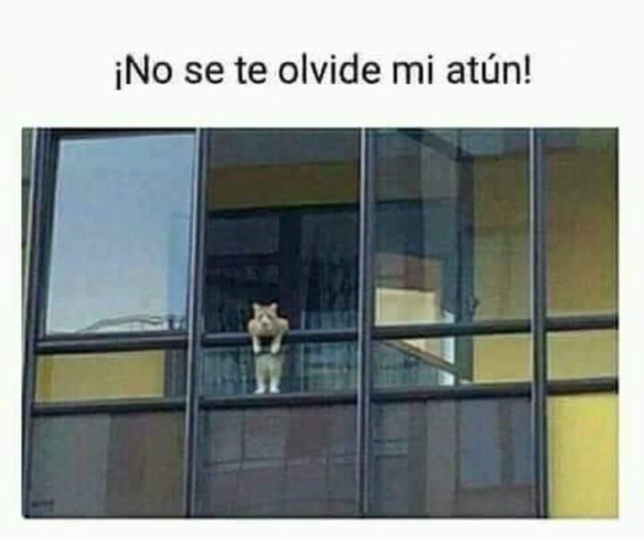 el gatito crack - meme