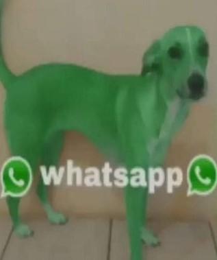 Perro wasa - meme