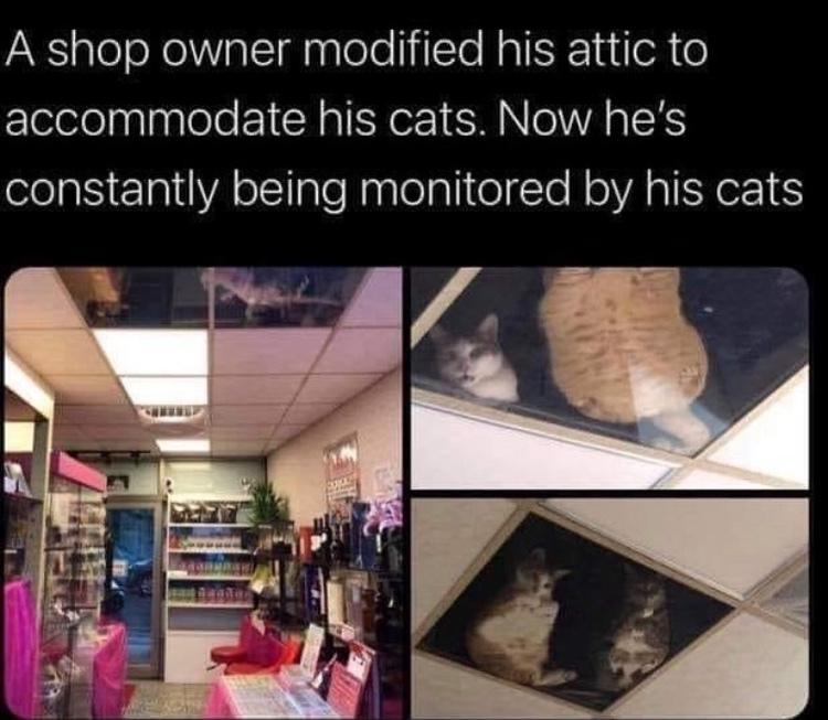 cat security - meme