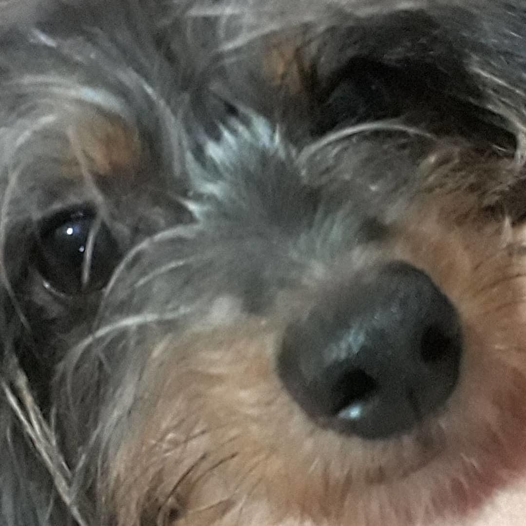 Dog reveal - meme