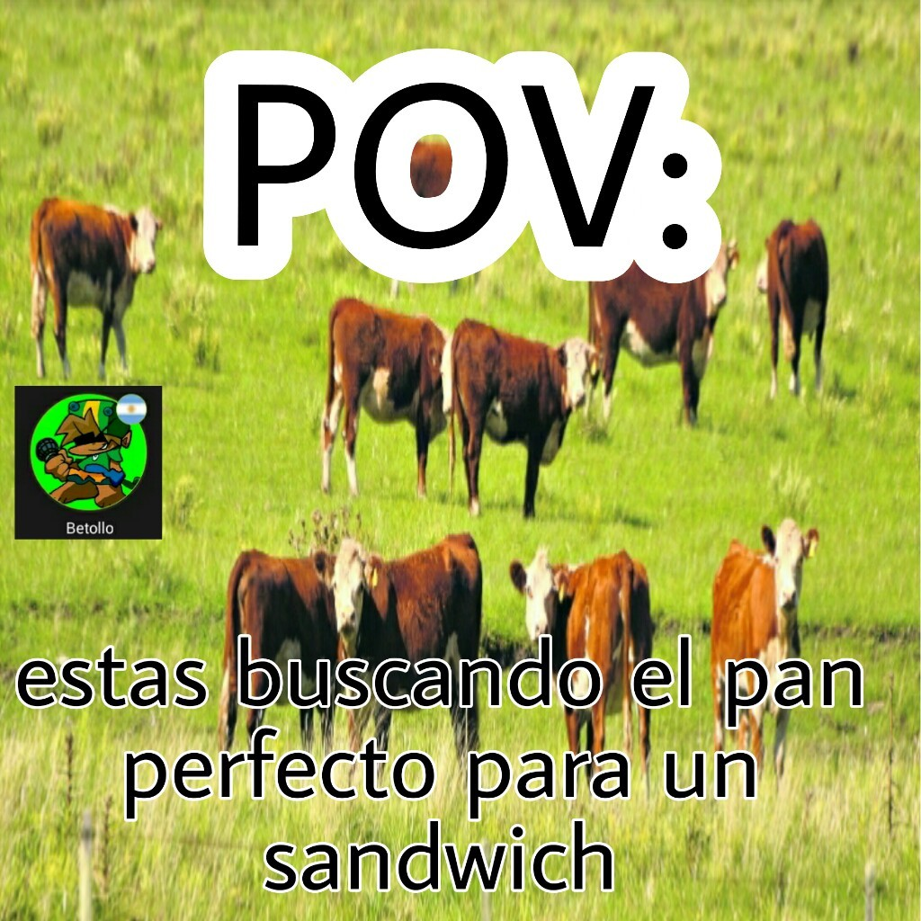 Buscar el perfecto es igual a buscar una buena vaca para matar, cocinar y comer - meme