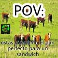 Buscar el perfecto es igual a buscar una buena vaca para matar, cocinar y comer