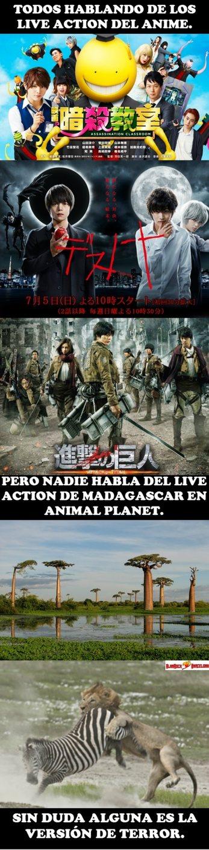 Madagascar live action - meme