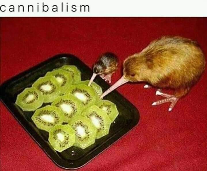 Eating it's own - meme