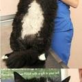 gatão sem sacão