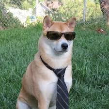 Perro Corte empresario - meme