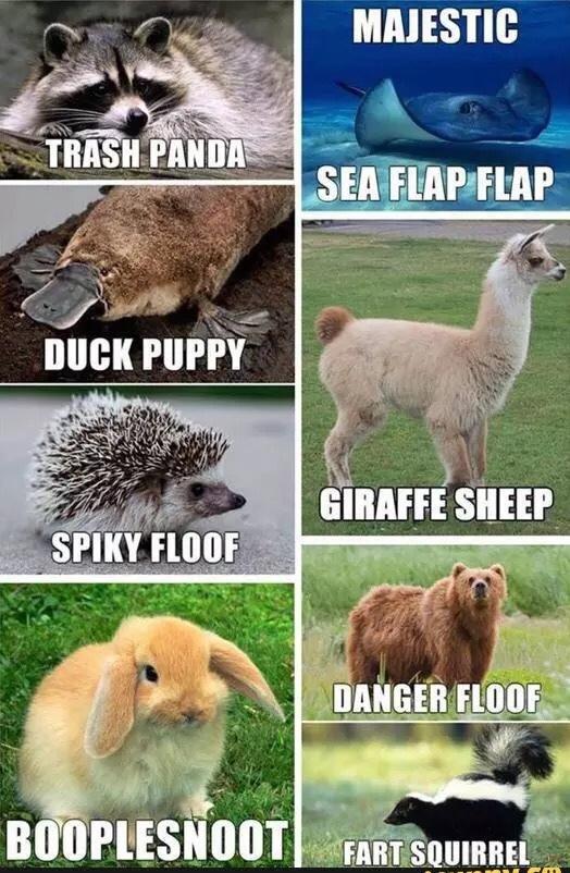 duck puppy - meme