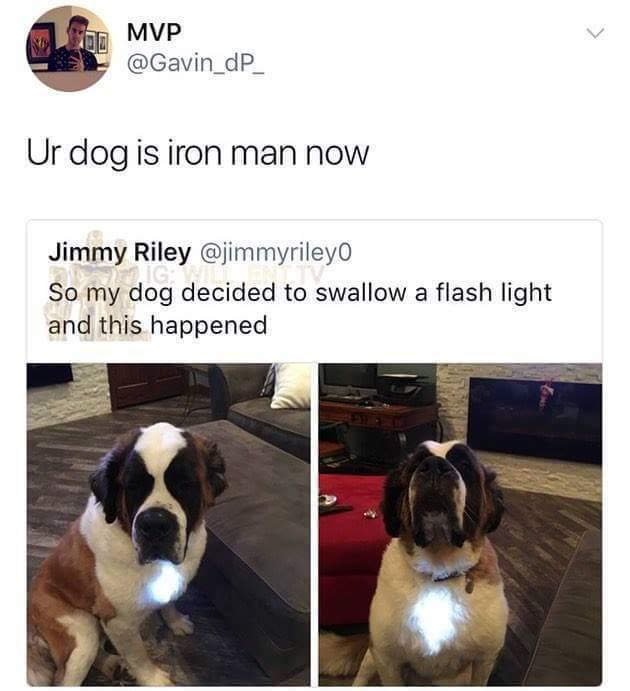 Iron Doggo - meme